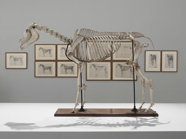 Installation shot of the skeleton of Eclipse and 'The Anatomy of the Horse' © Andy Keate