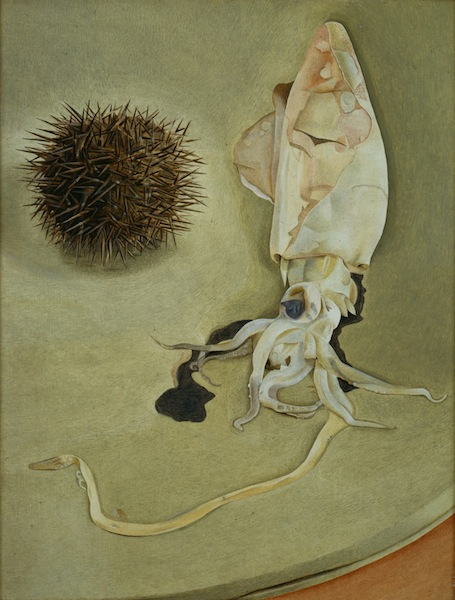 Lucian Freud, Still Life with Squid and Sea Urchin, 1949