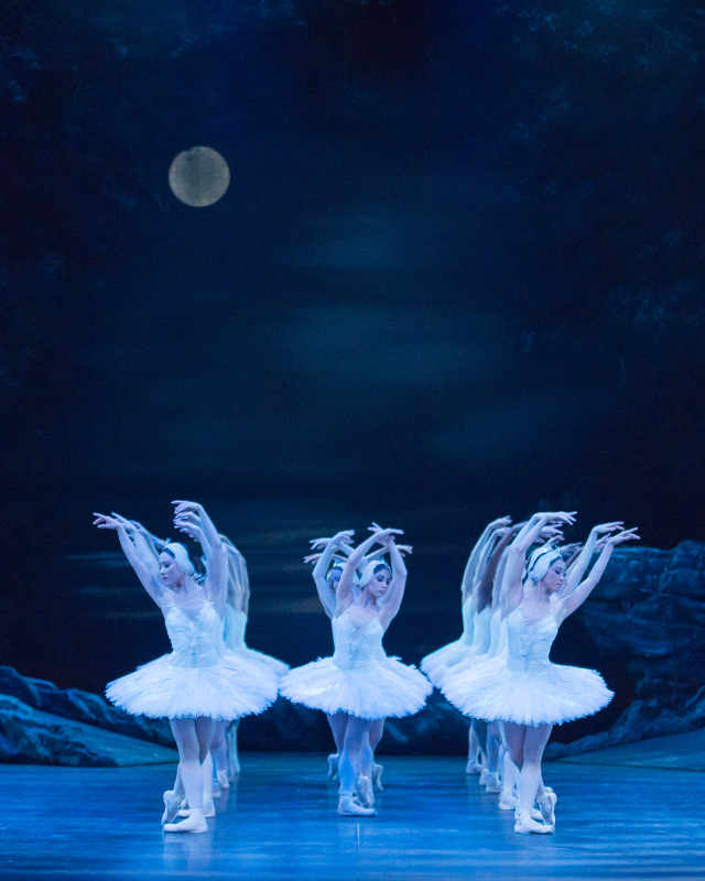 The dancers of ENB as swans