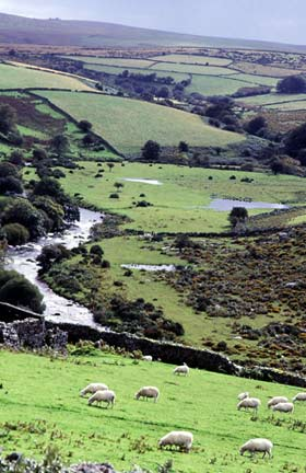 tad_walking-on-dartmoor